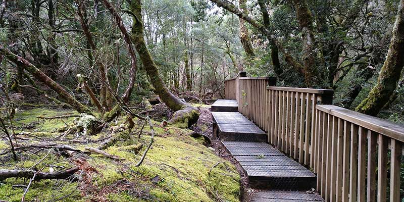 enchanted-walk-que-ver-en-tasmania