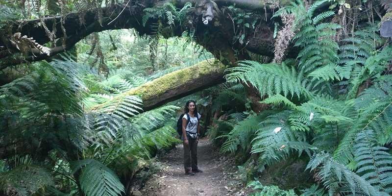 que-ver-en-tasmania-guia-de-viaje-bycamper