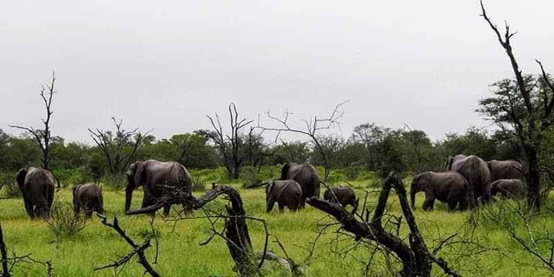 elefantes en kruger national park