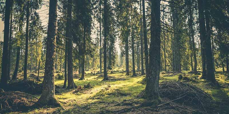 la importancia de los bosques