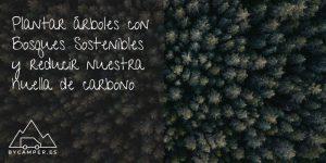plantar-arboles-con-bosques-sostenibles---podcast